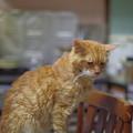 写真: 2012年8月24日のボクチン(8歳)