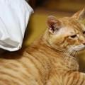 写真: 2010年9月2日のボクチン(6歳)