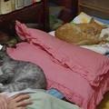Photos: 2012年9月19日のボクチン(8歳)
