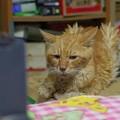 Photos: 2012年9月21日のボクチン(8歳)