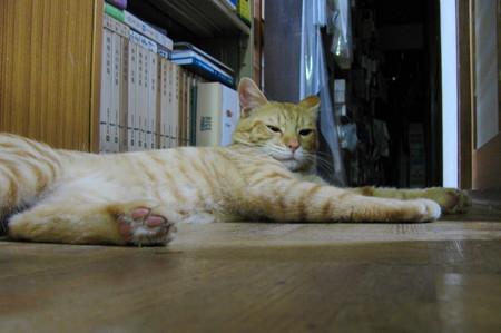 2008年9月25日の茶トラのボクちん(4歳)