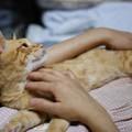 写真: 2009年9月27日のボクチン(5歳)