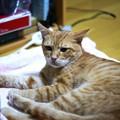 写真: 2009年9月29日のボクチン(5歳)