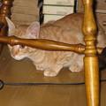 写真: 2008年10月3日のボクチン(4歳)
