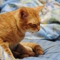 写真: 2009年10月11日の茶トラのボクちん(5歳)