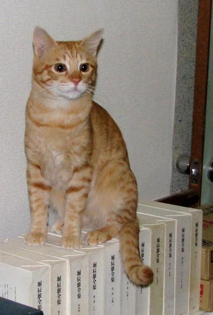 2008年10月17日のボクチン(4歳)