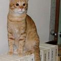 写真: 2008年10月17日のボクチン(4歳)