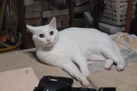 2015年10月05日のシロちゃん(メス2歳)