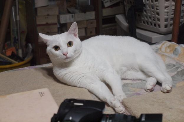 Photos: 2015年10月05日のシロちゃん(メス2歳)
