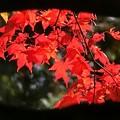 瞳の中の秋色