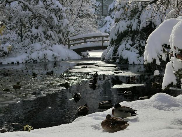 写真: 「第二回写真と言の葉大会」~雪をも解かす二羽の絆と愛~