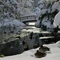 「第二回写真と言の葉大会」~雪をも解かす二羽の絆と愛~