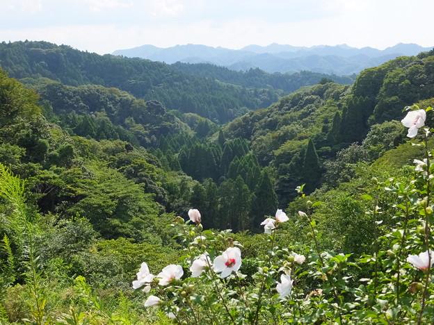 遠くの山並と近くの白い花…