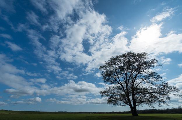 ハルニレの木/秋