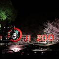 Photos: 王子動物園01