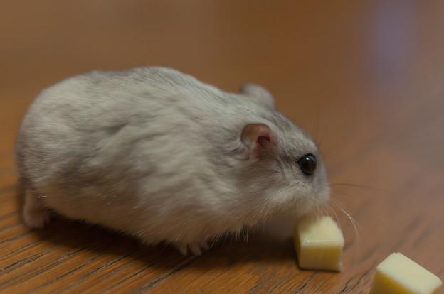 チーズに夢中 03