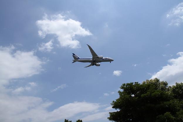 ANA Boeing 787-881(JA824A) 2