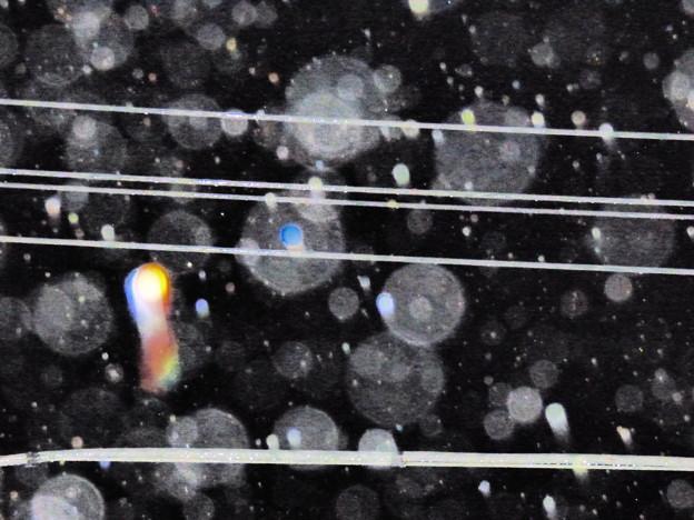 Photos: 夜の雨粒を…2014.7.11