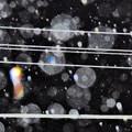 夜の雨粒を…2014.7.11