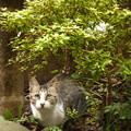 Photos: 我が家庭にて 2014.7.22(2)