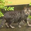 「新入り」の親猫?(2)