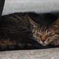 「新入り」の親猫? 2014.8.15(2)