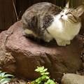 庭石と野良猫 2014.10.20