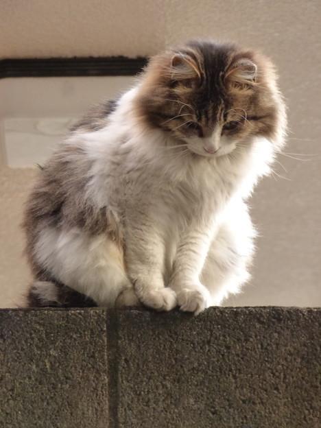 Photos: 塀の上から「あけおめ」!?