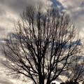 写真: 冬枯れシルエット