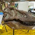 Photos: ティラノサウルス頭骨