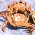 写真: 20151007「藻屑蟹」