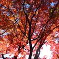 殿ヶ谷戸の紅葉