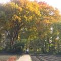 黄葉の樹林