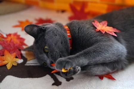 この葉っぱ 食えにゃい