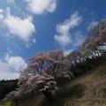 Photos: お花見日和