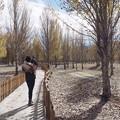 Photos: The way of Autumn
