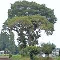 Photos: 大木の下を…