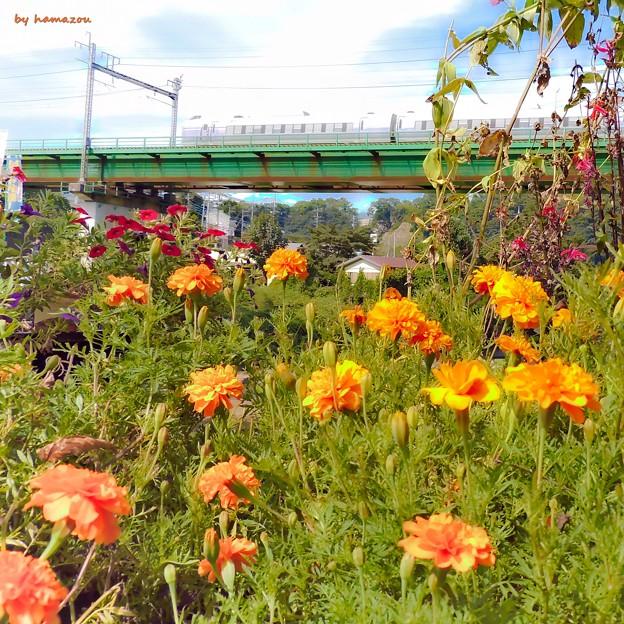 Photos: 秋の沿線5