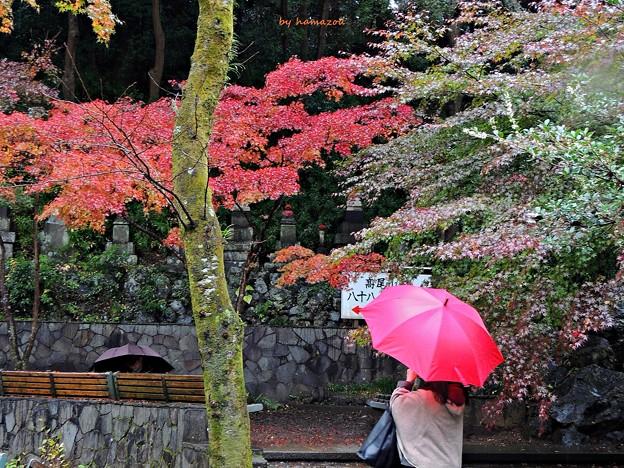 秋雨の彩り