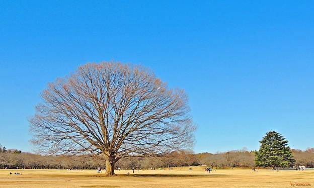 写真: 冬晴れの公園