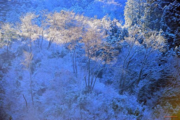 裏高尾の雪景色