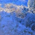 写真: 裏高尾の雪景色