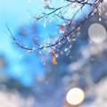 Photos: キラキラ~♪♪