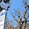 Photos: 高尾梅郷(1)