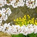 Photos: E~春