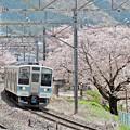Photos: 春の中央沿線(5)