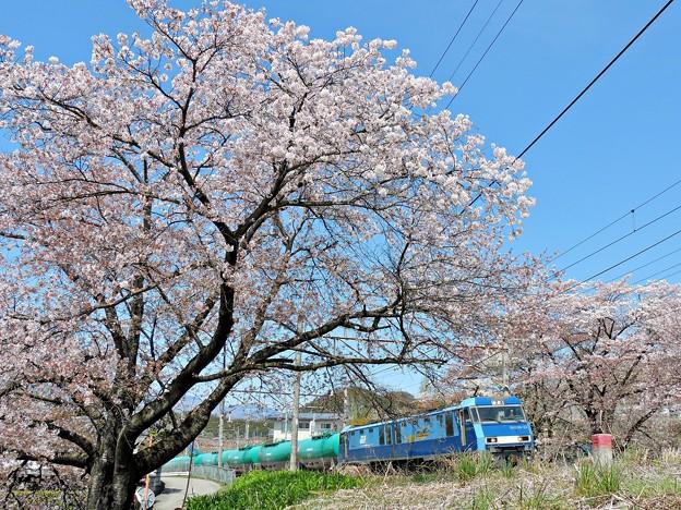 Photos: 春の中央沿線(6)