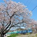 春の中央沿線(6)
