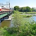 写真: 新緑の河川敷(3)