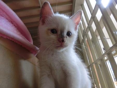 美人猫に変身中
